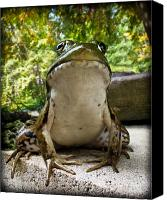 Macro Canvas Prints - Frog Prince or so he thinks Canvas Print by Bob Orsillo
