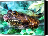 Bullfrogs Canvas Prints - Frog Ready To Be Kissed Canvas Print by Susan Savad