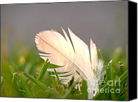 Shining Down Canvas Prints - From Above Canvas Print by Diana Lovett