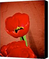 Two Red Tulips Canvas Prints - From The Fire Canvas Print by Odd Jeppesen