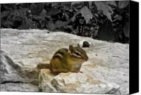 Chipmunk Picture Canvas Prints - Front And Center Canvas Print by Debra     Vatalaro