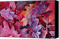 Quercus Canvas Prints - Frosted Red Oak Leaves Canvas Print by Tony Beck