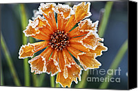 Icy Canvas Prints - Frosty flower Canvas Print by Elena Elisseeva