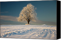 Solitude Canvas Prints - Frosty Oak Tree Canvas Print by by Sigurd Rage