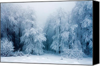 Frozen Canvas Prints - Frozen Forest Canvas Print by Evgeni Dinev