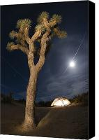 Joshua Trees Canvas Prints - Full Moon Rising Over A Joshua Tree Canvas Print by Rich Reid