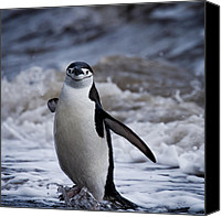 Swim Canvas Prints - Fun time at the beach Canvas Print by Jane Sheng
