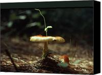 Other World Photo Canvas Prints - Fungus 3 Canvas Print by John Foote