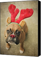 Boxer Canvas Prints - Funny Boxer Puppy Canvas Print by Jody Trappe Photography