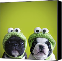 French Bulldog Canvas Prints - Funny Dogs Canvas Print by Retales Botijero