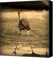 Long Pyrography Canvas Prints - Funny Flamingo Canvas Print by Radoslav Nedelchev