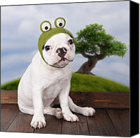 French Bulldog Canvas Prints - Funny French Bulldog Puppy Canvas Print by Maika 777