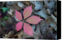 Fushia Canvas Prints - Fushia Leaf 2 Canvas Print by Douglas Barnett