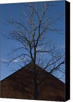 Gable Canvas Prints - Gable Of An Old Barn And A Tree Canvas Print by Todd Gipstein