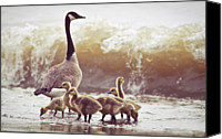 Goose Canvas Prints - Gaggle Canvas Print by Photogodfrey