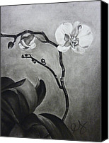 Estephy Sabin Figueroa Drawings Canvas Prints - Galens Orchid Canvas Print by Estephy Sabin Figueroa
