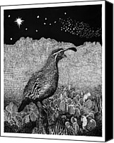 William Drawings Canvas Prints - Gamblels Quail Lucy in the sky Canvas Print by Jack Pumphrey