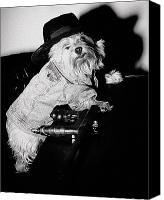 Dog Photo Canvas Prints - Gangster Dog Canvas Print by Susan Stone