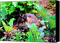 Critters Canvas Prints - Garden Bunny Canvas Print by Nick Gustafson