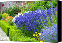 "\""forget Me Not Flowers\\\"" Canvas Prints - Garden Flowers Canvas Print by Svetlana Sewell"