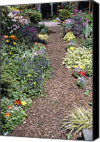 "\""forget Me Not Flowers\\\"" Canvas Prints - Garden Path Canvas Print by Archie Young"