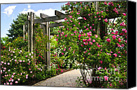 Walkway Canvas Prints - Garden with roses Canvas Print by Elena Elisseeva