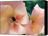 Peach Colored Canvas Prints - Garden Wonders 3 Canvas Print by Dave Dresser