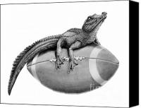 Football Drawings Canvas Prints - Gator Football Canvas Print by Murphy Elliott