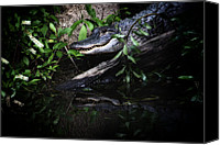 Gator Canvas Prints - Gator Reflect Canvas Print by Karol  Livote