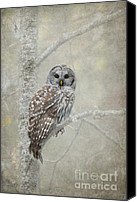Barred Owl Canvas Prints - Gaurdian of the Woods Canvas Print by Reflective Moments  Photography and Digital Art Images