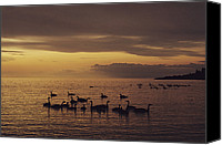 Copper Harbor Canvas Prints - Geese On Lake Superior At Twilight Canvas Print by Medford Taylor