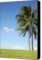 Brandon Tabiolo Canvas Prints - Generic Palm Tree Canvas Print by Brandon Tabiolo - Printscapes