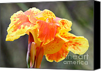 Canna Canvas Prints - Gentle Awakening Canvas Print by Carol Groenen