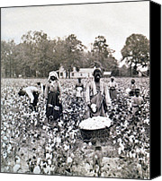Picker Canvas Prints - Georgia Cotton Field - c 1898 Canvas Print by International  Images
