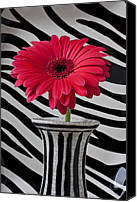 Vases Canvas Prints - Gerbera daisy in striped vase Canvas Print by Garry Gay