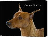 Pinscher Canvas Prints - German Pinscher Canvas Print by Larry Linton