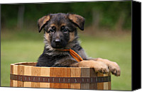 Alsatian Canvas Prints - German Shepherd Puppy in Planter Canvas Print by Sandy Keeton