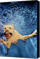 Diving Dog Canvas Prints - Getting Closer Canvas Print by Jill Reger
