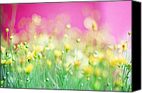 Asian Art Canvas Prints - Giddy in Pink Canvas Print by Amy Tyler