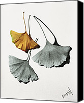 Photo-realism Canvas Prints - Ginkgo Leaves Canvas Print by Garry McMichael