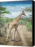 Dirt Road Canvas Prints - Giraffe Crossing Road In Masai Mara Canvas Print by Mehmed Zelkovic
