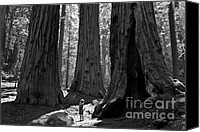 Old Trees Canvas Prints - Girl and Giants Canvas Print by Olivier Steiner