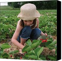 Caucasian Appearance Canvas Prints - Girl Picking Strawberries Canvas Print by Michelle Quance