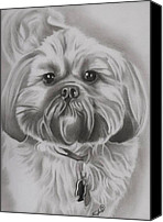 Lion Drawings Canvas Prints - Gizmo - Shih Tzu Dog Breed Canvas Print by Fred Larucci