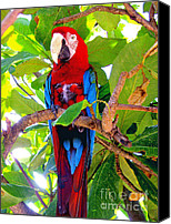 Mascot Special Promotions - Gizmo the Macaw Canvas Print by Jerome Stumphauzer
