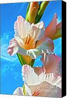 Inspirational Photograph Canvas Prints - Gladiolus Canvas Print by Heiko Koehrer-Wagner