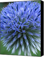Close Up Canvas Prints - Globe Thistle Canvas Print by Juergen Roth