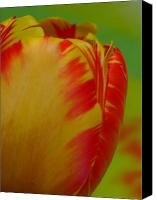 Wild-flower Canvas Prints - Globe Tulip Canvas Print by Juergen Roth