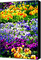 Gardens Canvas Prints - Glorious Pansys Canvas Print by Karen Wiles