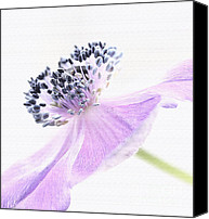 Flowers Garden Canvas Prints - Glowing Anemone Canvas Print by Kristin Kreet